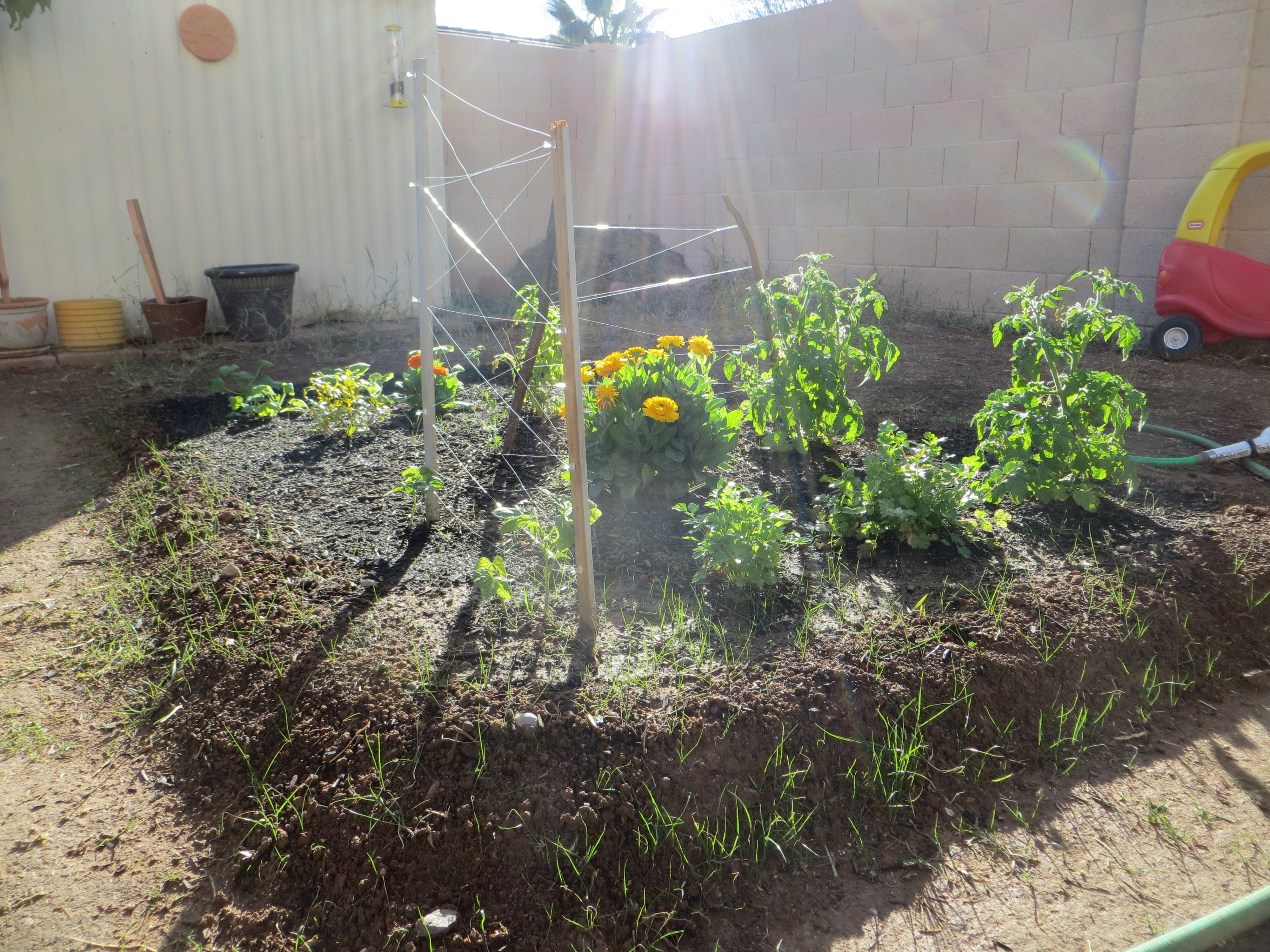 how to build a backyard garden