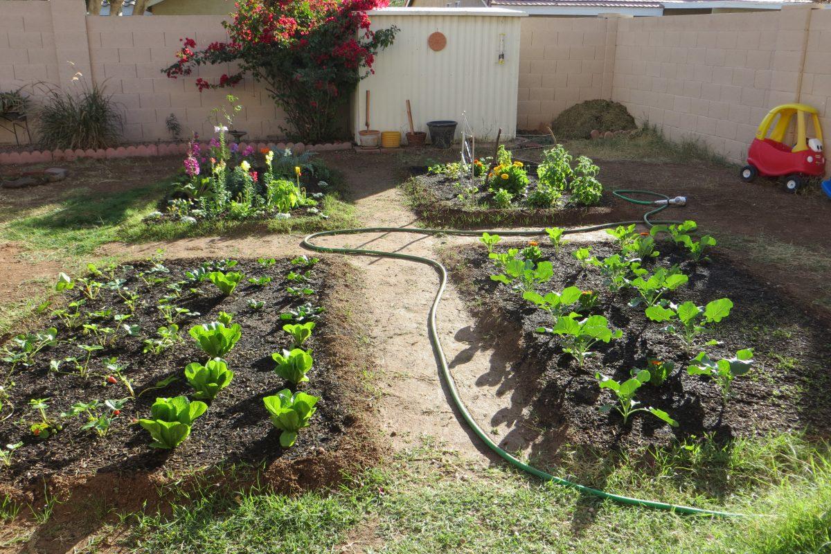 How to build a backyard garden: Part 2
